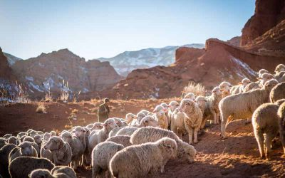 What Is Pastoral Ministry